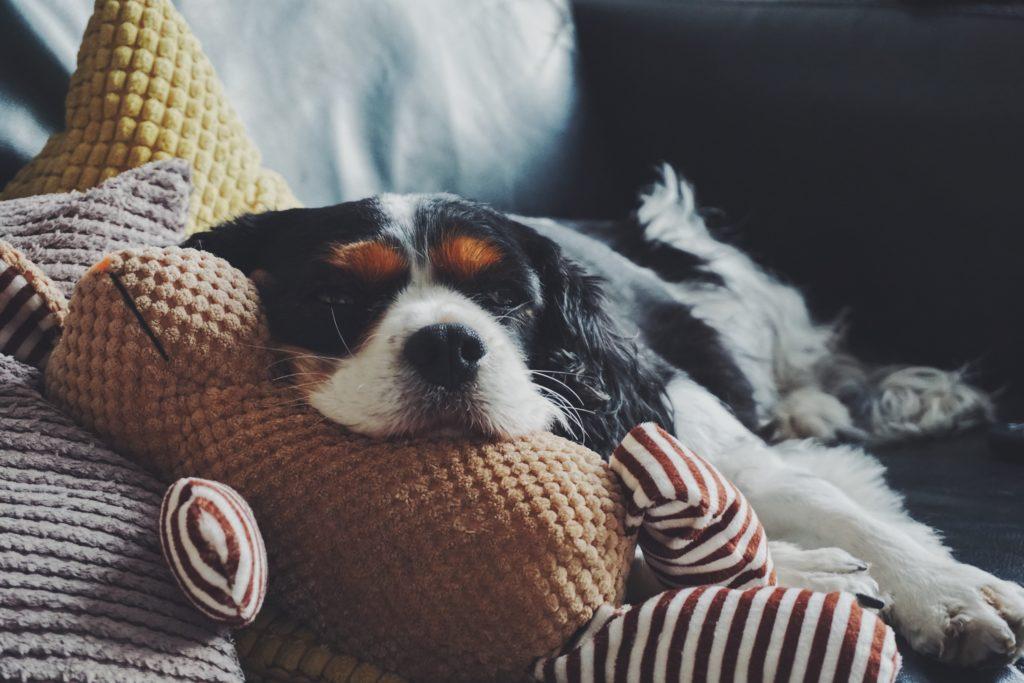 Cuidados para sofás cuando vives con mascotas
