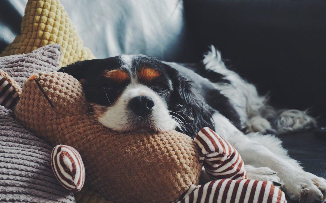 Cuidados para tu sofá cuando vives con mascotas